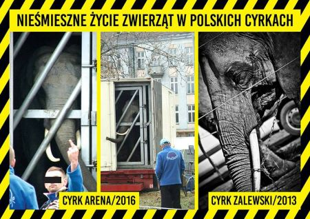 Demonstracja pod Sejmem przeciwko wykorzystywaniu zwierząt w cyrkach! 29.03