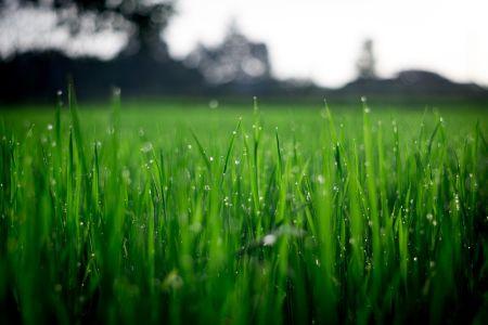 Ogród w symbiozie z naturą – jak dbać o trawnik, by nie naruszać ekosystemu gleby fot Pexels