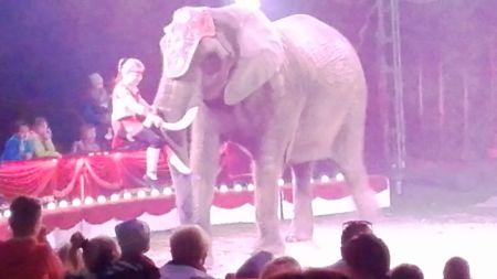 arena slon dziecko