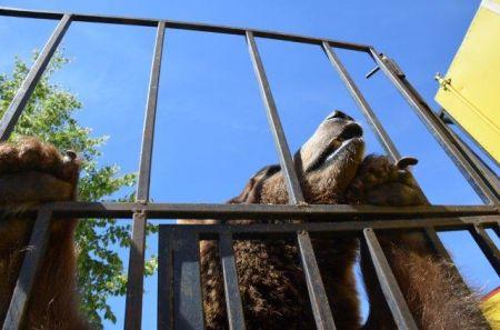 Są zarzuty w głośnej sprawie znęcania się nad zwierzętami w cyrku.
