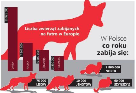 Spotkanie w Sejmie – ważą się losy nowelizacji ustawy o ochronie zwierząt
