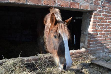 Interwencyjny odbiór kilkudziesięciu zwierząt w Kazimierzu Dolnym