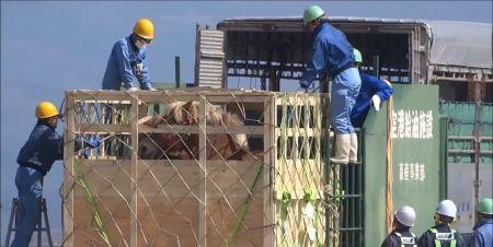 List otwarty lekarzy weterynarii w sprawie transportu koni do Japonii