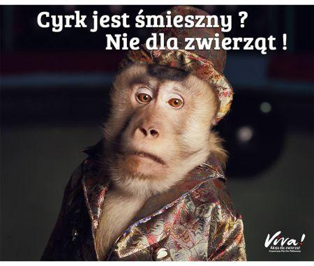 cyrk1 1