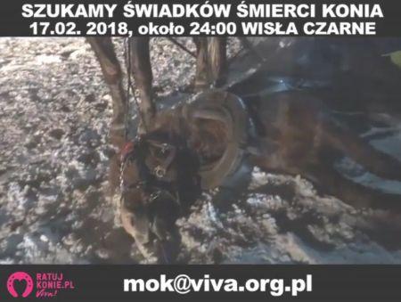 Koń zmarł podczas kuligu w Wiśle